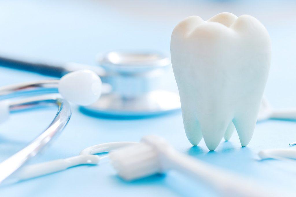 Dental model