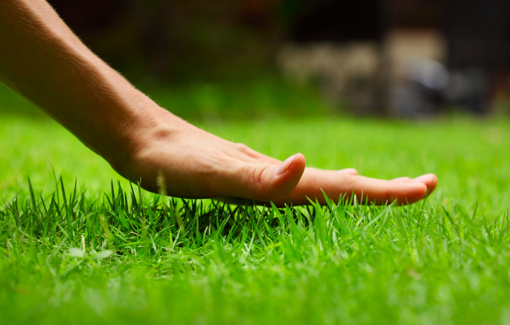 person holding lawn