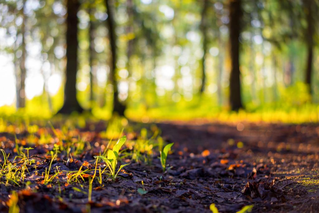 nature's soil